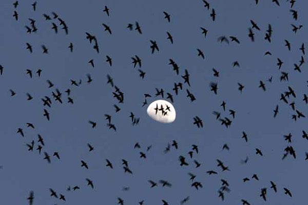 vaux swifts